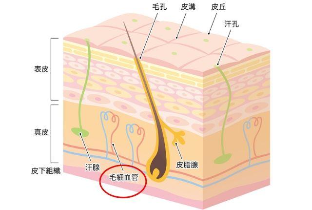 エミュール入浴剤ミネラルバスパウダー毛細血管部分参考図
